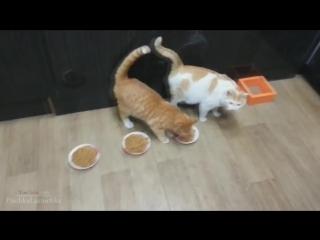 Нарезка приколов с котами - #животные#смотреть#видео#приколы#смешно#нарезка#безрекламы#HD#100500#2015#2014#корткие