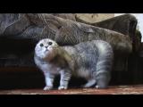 довели кота что он заговорил)) смех до слез