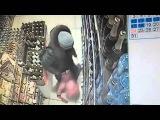 Женщина избила ногами маленькую дочь в череповецком магазине видео с камеры наблюдения