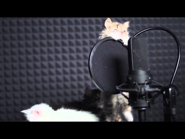 Cute KITTENS Sing In AUTOTUNE