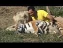 дружба диких кошек и человека)
