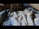 моя котэ 3