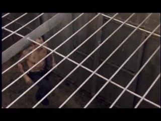 Blatnoi mir. Блатной мир (2001). Тюрьма Остров Огненный. Фильм о приговоренных к смертной казни, но помилованных на пожизненное.