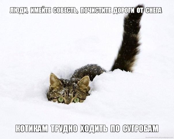 [Изображение: DoGS34IHWbc.jpg]