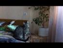 Муся - говорящая кошка.