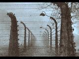 Наши пленные в немецком плену. Ужасы концлагеря Аушвиц, 1941 - 1945, Отечественная война, фильм