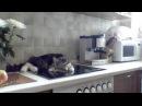 Никифор кот-грубиян - огрызается, несуразно выражается, спорит с хозяйкой - MUST SEE! ...