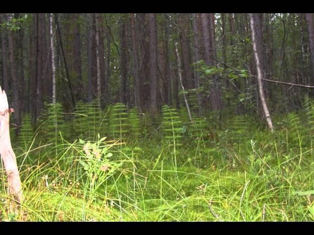 Магический лес Программа исполнения желаний