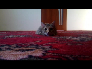Кошка Маня танцует Выгу Выгу.
