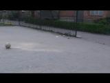Тарасік ( Гаред Бейл) ліва нога