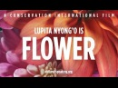 Nature Is Speaking Lupita Nyong'o is Flower Conservation International CI