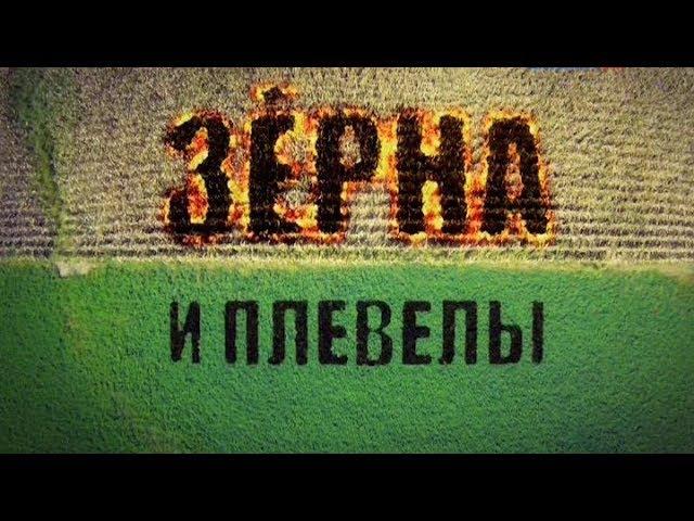 Фильм Константина Семина Зёрна и плевелы 2015 » Freewka.com - Смотреть онлайн в хорощем качестве