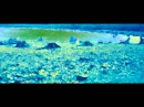 Neil Landstrumm - Ode To Passive Souls KILLEKILL 017