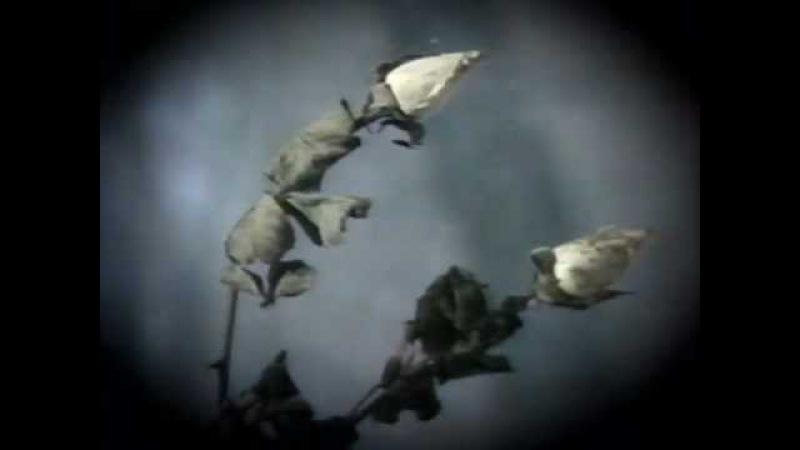 Юрий Шатунов - Белые розы. Оригинал (официальный клип) 1989