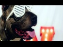 Party Favor Zooly - Meow (Official Video)