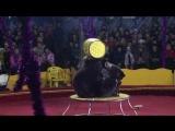 Цирк Шапито 1