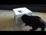 5 полезных советов для тех, у кого дома есть котейка