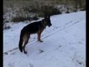 Утренняя прогулка с моей любимой собакой Ханкой