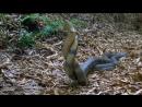 Жизнь с холодной кровью. 4) Удивительные змеи (2008)