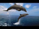 Wild and Free in the Open Sea, Дикие и Свободные Дельфины
