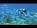 Документальный фильм - Самые опасные животные. Морские глубины. HD (2009)