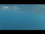 سمكة التونة العنيدة HD : قريب جداً - الموسم 4 – ح16