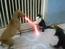 Jedi Cat with lightsabers - Fights off Dogs