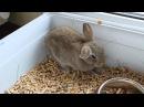Кролик Пушинка / How falls asleep rabbit