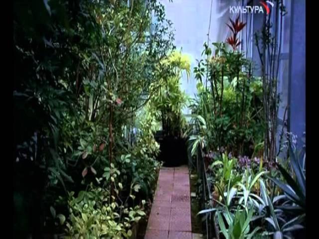 Разум растений / L'esprit des plantes