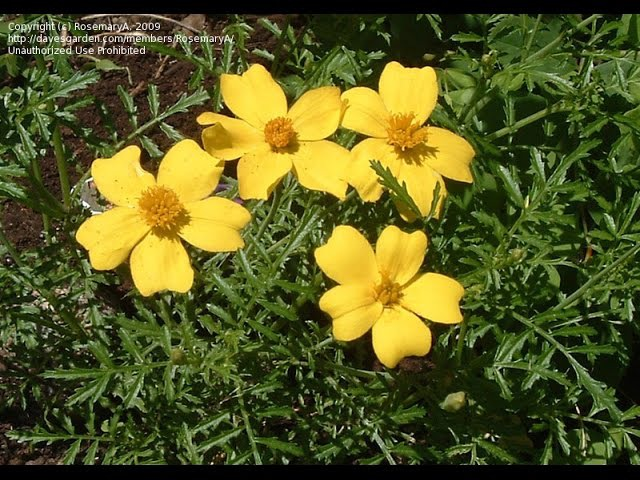 Цветы не требующие особого ухода. Flowers do not require special care