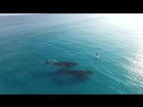 #голос Два кита плывут рядом, а Жозефина Шарлотта Ингеборга Елизавета Мария Жозефа Маргарита Астрид Бельгийская - дочь короля Ле