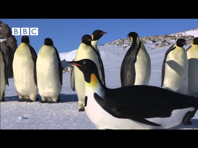 ROBOT PENGUINCAM MEETS EMPEROR PENGUINS FROM PENGUINS - SPY IN THE HUDDLE