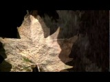 The Mission UK  - Butterfly On A Wheel HD Official Video