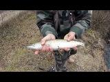 Щука и окунь поздней осенью. Рыбалка ловля на спиннинг воблер.