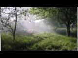 Аида Ведищева - Старый сад