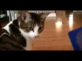 Странная реакция кота на расческу) Смешное видео с кошками