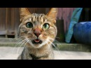 Lustige Videos Zum Totlachen | Lustige Katzen Videos deutsch | Ninja Witzige Katzen LOL video 30