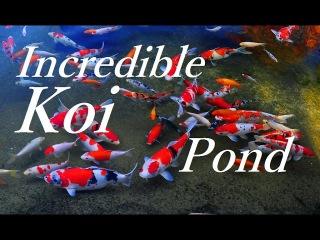 World's Greatest Relaxing Koi Pond