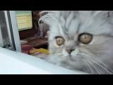 Кошак издает прикольный звук