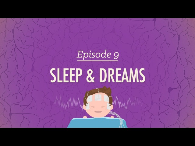 To Sleep, Perchance to Dream - Crash Course Psychology 9
