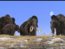BBC Прогулки с чудовищами 06 Путешествие мамонта