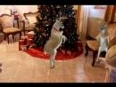 танцуещие олени