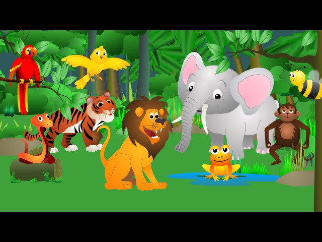 Best Animal Sounds Song Jungle
