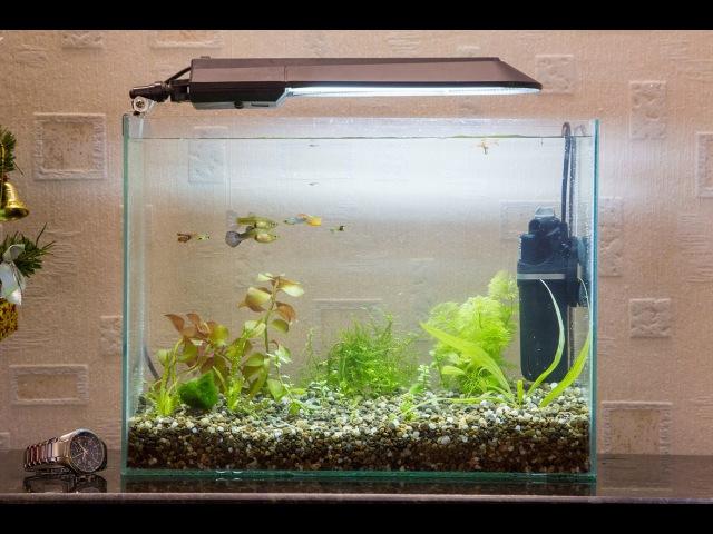 Запуск и оформление аквариума 20 литров качество 4К start aquarium