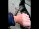 Вика Яна и кот