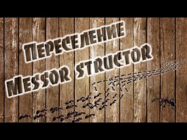 Переселение семейки Messor structor (муравей-жнец) в новый инкубатор. ЧАСТЬ 1.