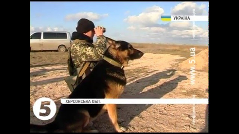 Прикордонники прихистили собаку з окупованого Криму