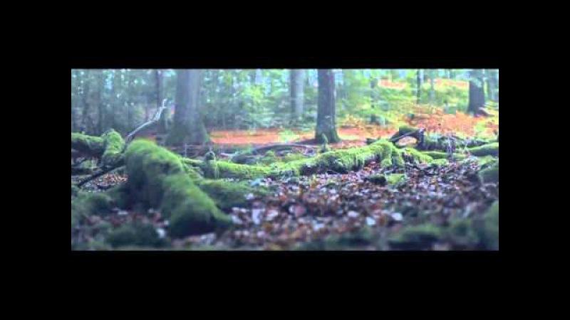 Леся Українка. Лісова пісня