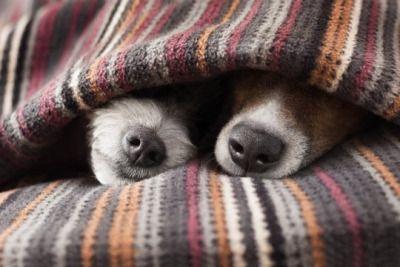 Как перевоспитать собаку: rк вопросу о нежелательном поведении UrsHXuQIALE