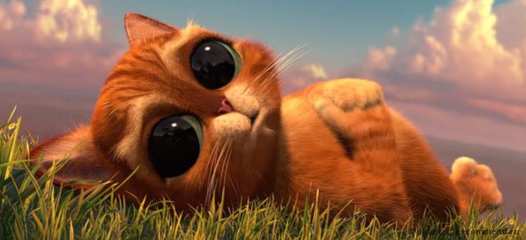 Фото кота из шрека с большими